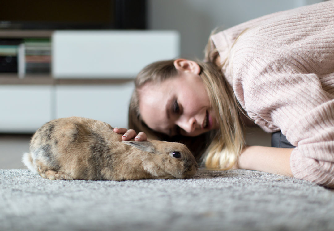 opieka nad królikiem